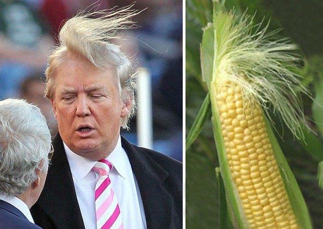 Things_That_Look_Like_Trump_1