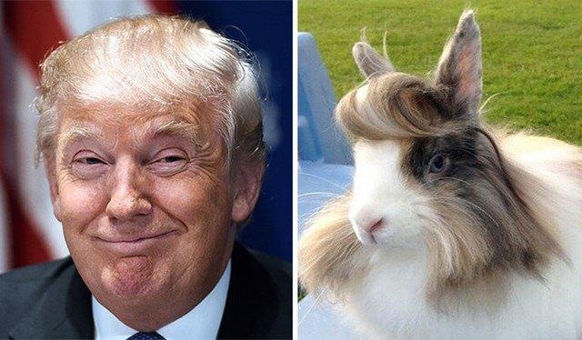 Things_That_Look_Like_Trump_11