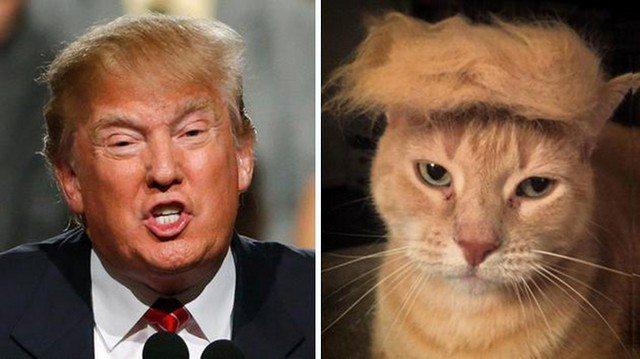 Things_That_Look_Like_Trump_12