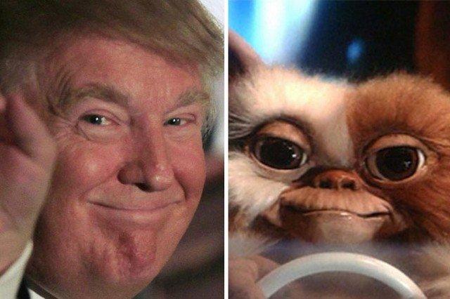 Things_That_Look_Like_Trump_15
