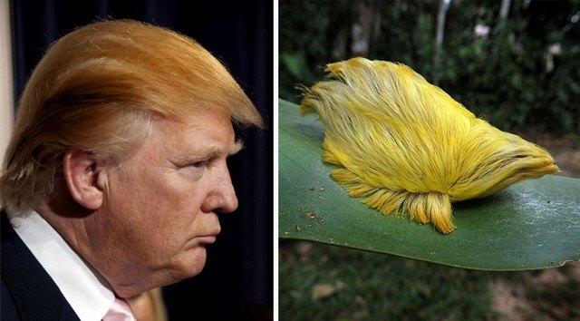 Things_That_Look_Like_Trump_3