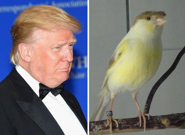 Things_That_Look_Like_Trump_4