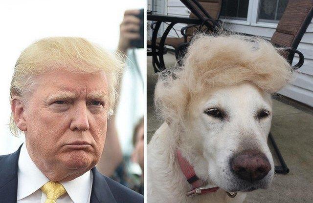 Things_That_Look_Like_Trump_6