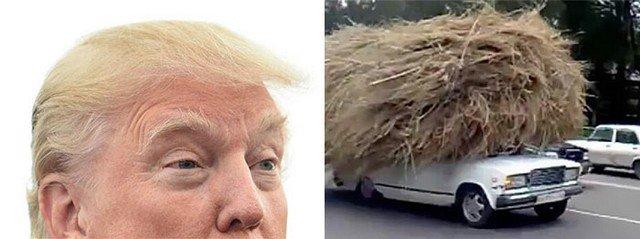 Things_That_Look_Like_Trump_7