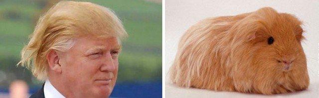 Things_That_Look_Like_Trump_8
