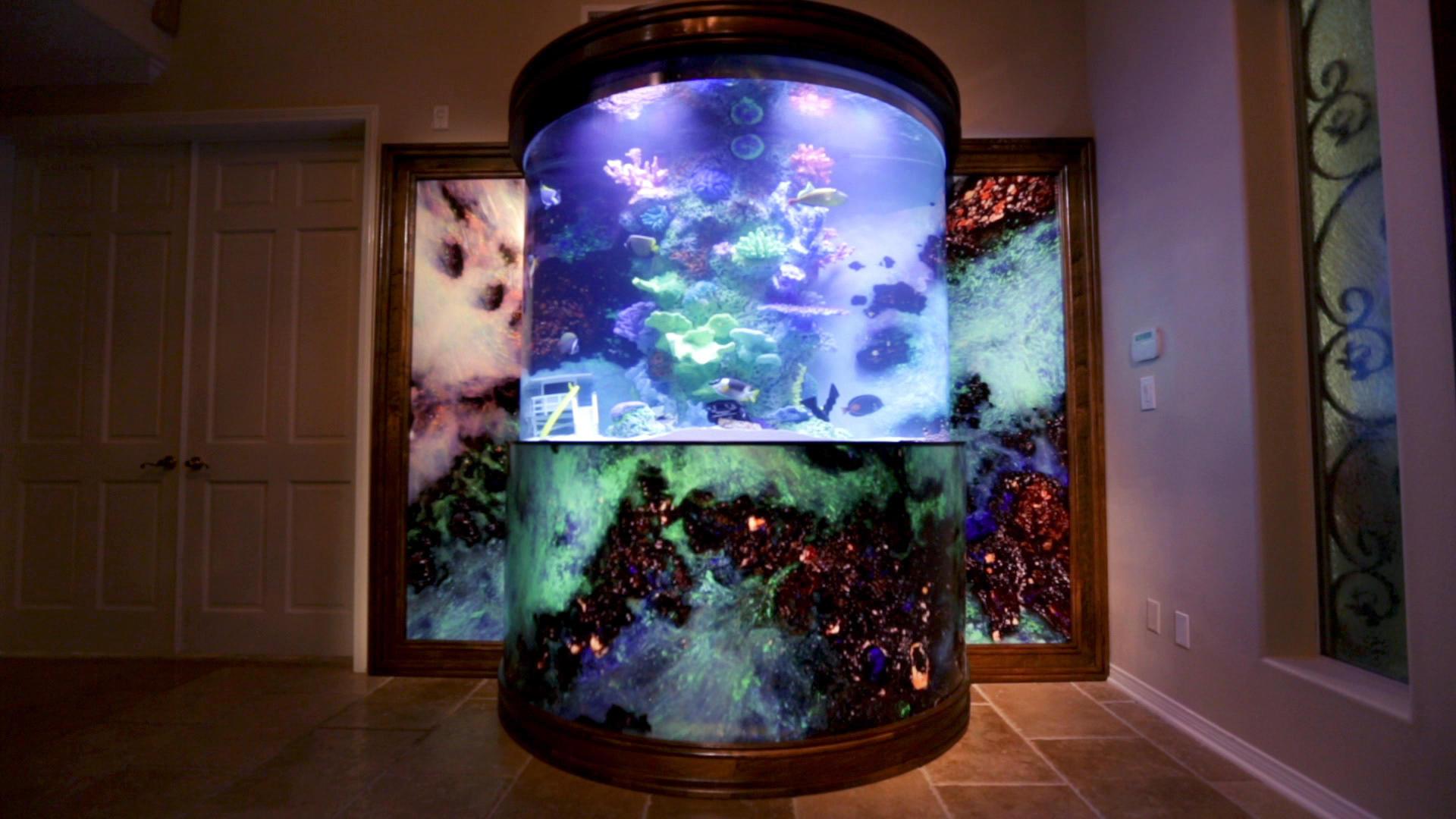 david hasslehoff's custom fish tank