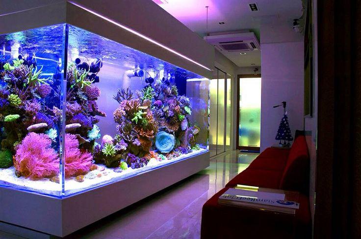 home reef aquarium