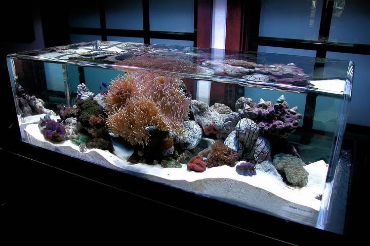 custom aquarium with rounded edges for $1 million