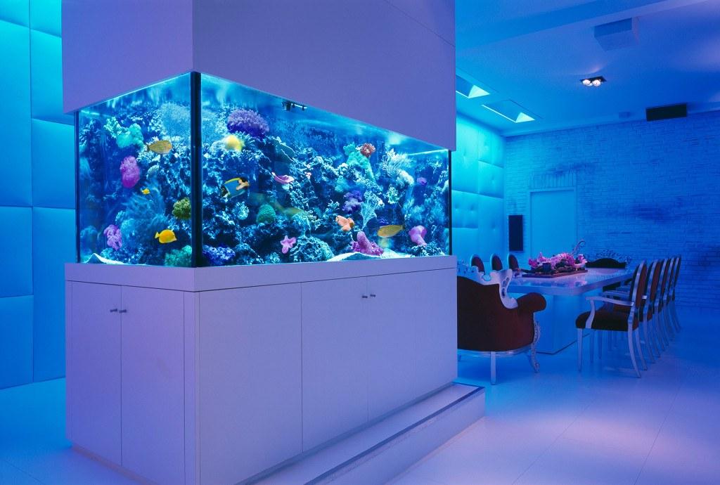 custom home fish tank
