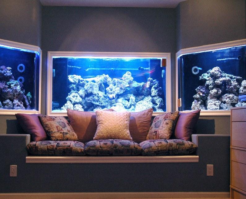 custom aquarium built in wall